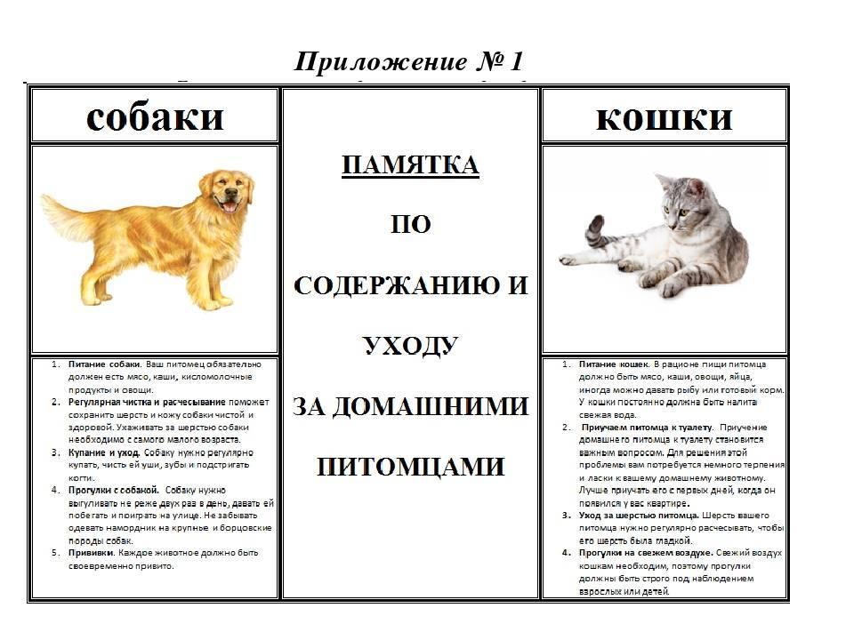 Как собака выбирает себе хозяина в семье: почему выбирает одного хозяина?