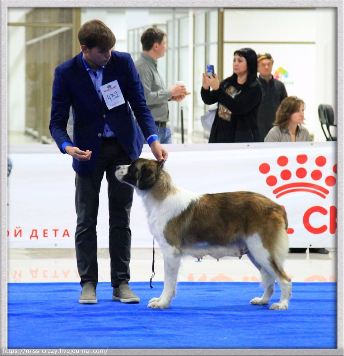 Всемирная выставка собак в москве – 2016 с фото