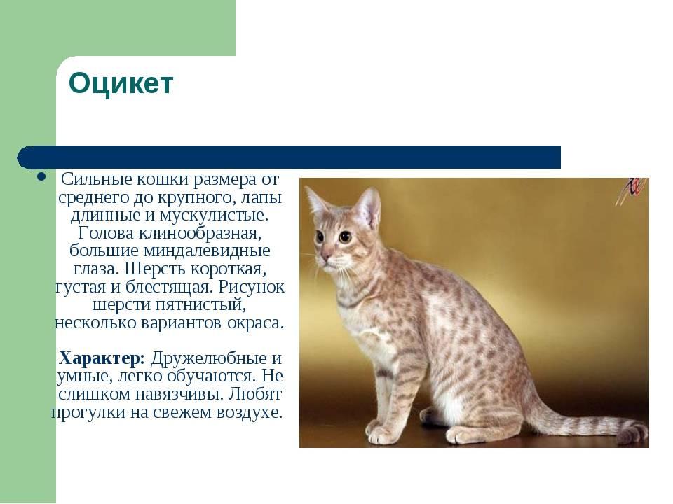 Самые редкие породы кошек