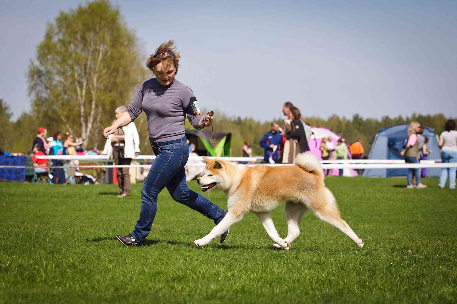 Как воспитать послушную собаку: начальный курс дрессировки от кинолога!
