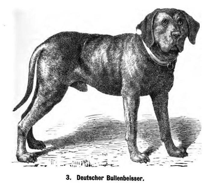Породы собак, которых больше не существует