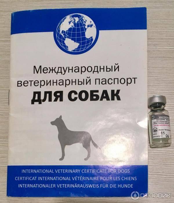 Вакдерм для кошек: инструкция по применению, цена, отзывы