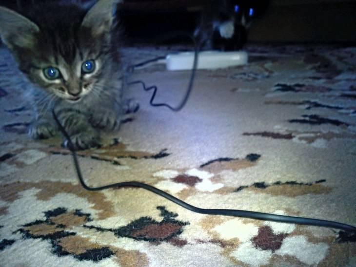 Как моментально отучить кота грызть провода