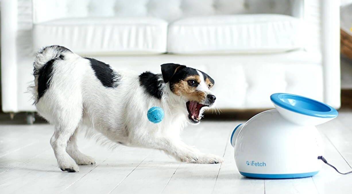 17 лучших гаджетов для домашних животных: ваши питомцы полюбят эти устройства
