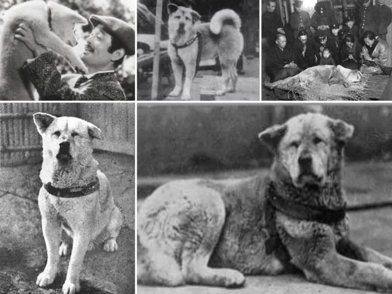 Хатико - собака, которая всемирно известна, как японский национальный символ преданности.