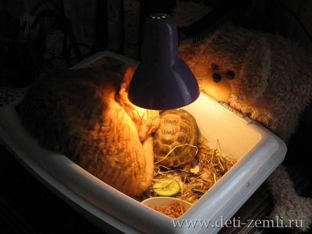 Ультрафиолетовая лампа для черепах: выбор, характеристики, эксплупатация