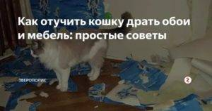 Как отучить кошку драть обои – реально или нет?