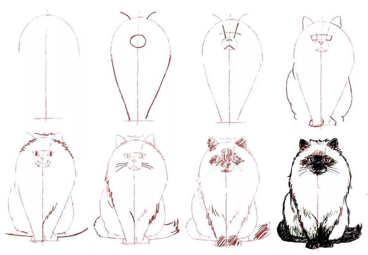 Как нарисовать кошку и кота карандашом