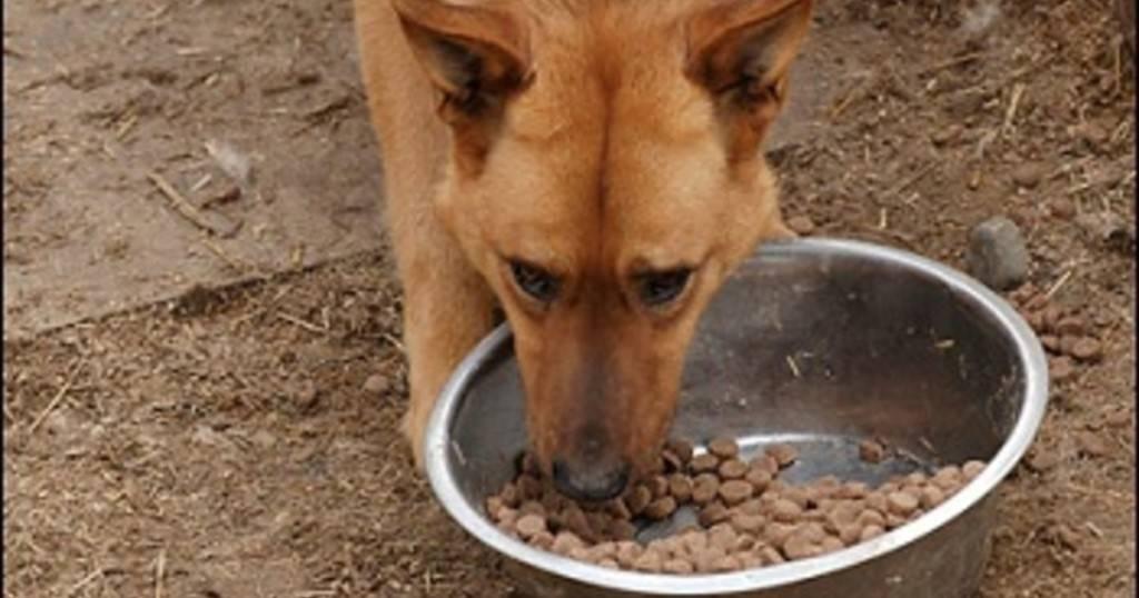 Почему собака ест траву: причины, зачем и можно ли, какие опасно