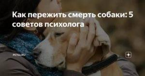 Как пережить смерть кота или собаки: советы психолога