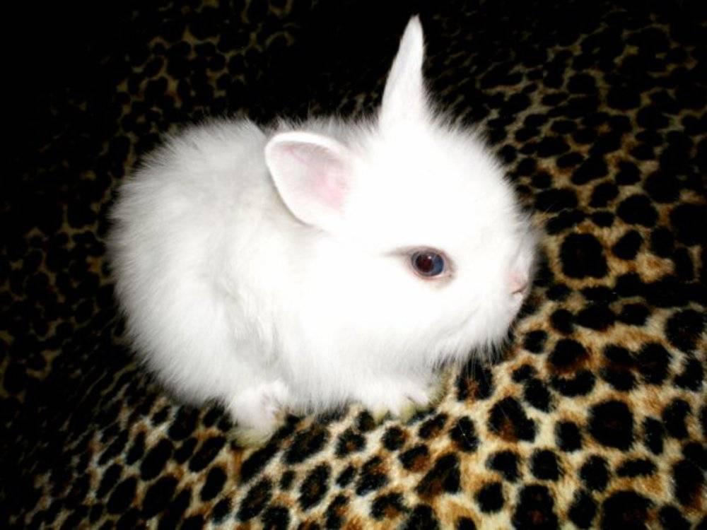 Имена для кроликов: как назвать девочку и мальчика