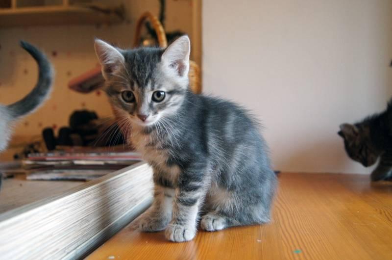 Как интересно назвать рыжего кота или кошку?
