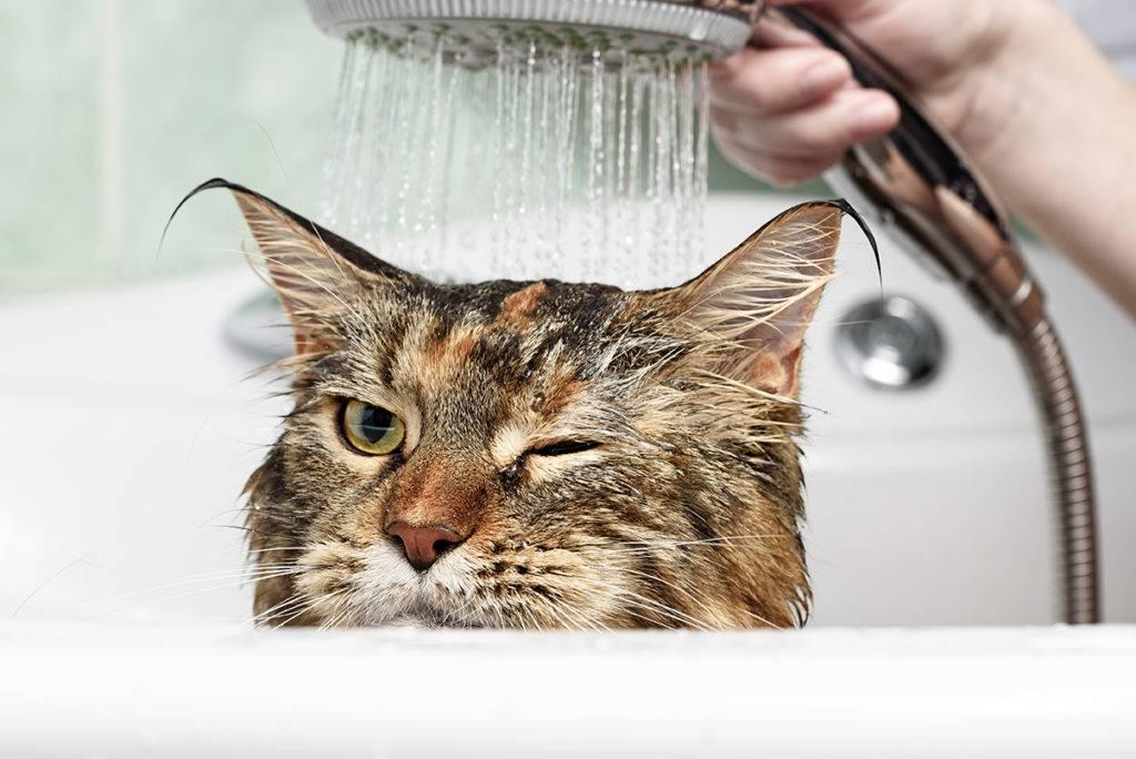 Почему кошки боятся воды: физиологические и психологические причины, как помочь кошке преодолеть страх, советы по купанию питомца