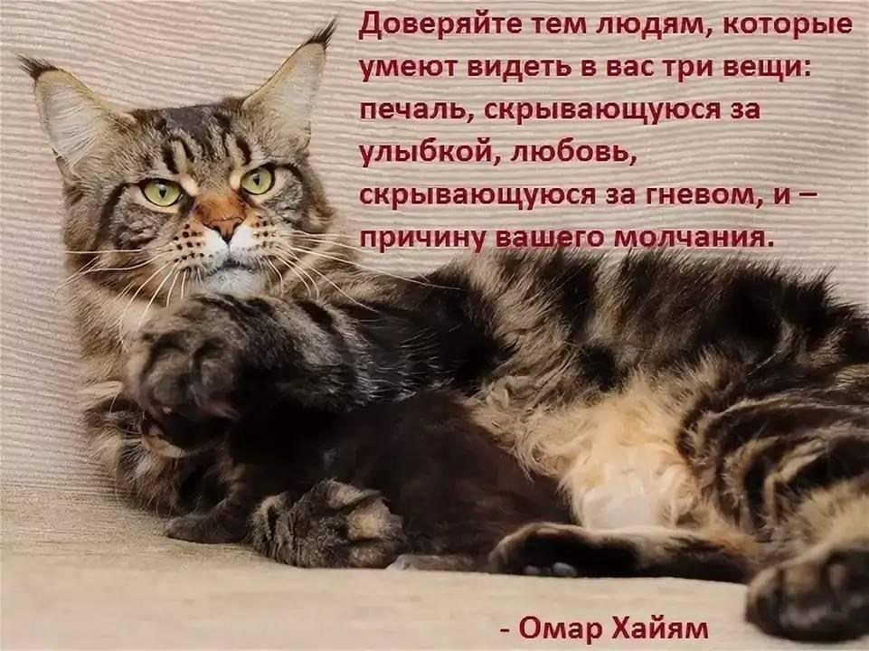 Топ вещей, которые ненавидят кошки и коты