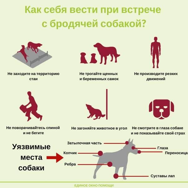 Поладит ли собака из приюта с ребёнком?