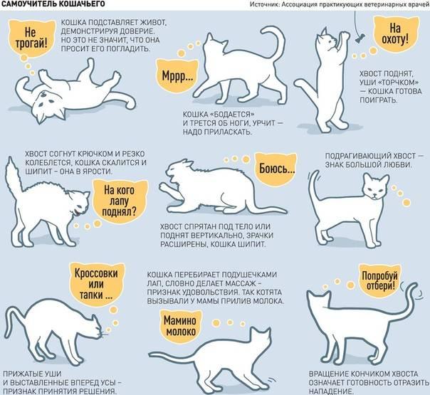 7 вещей, которые ненавидит ваша кошка