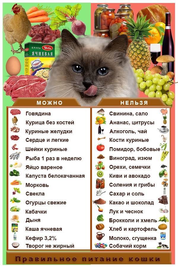 Чем кормить кошку после родов и как составить рацион