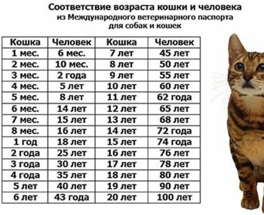 До какого возраста растут коты? до скольких месяцев растут обычные домашние кошки?