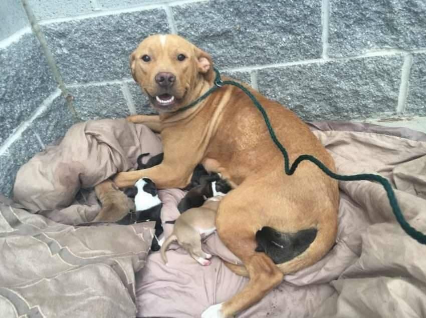 Самые беспроблемные собаки для квартиры: топ-10 маленьких, средних и крупных пород для домашнего содержания