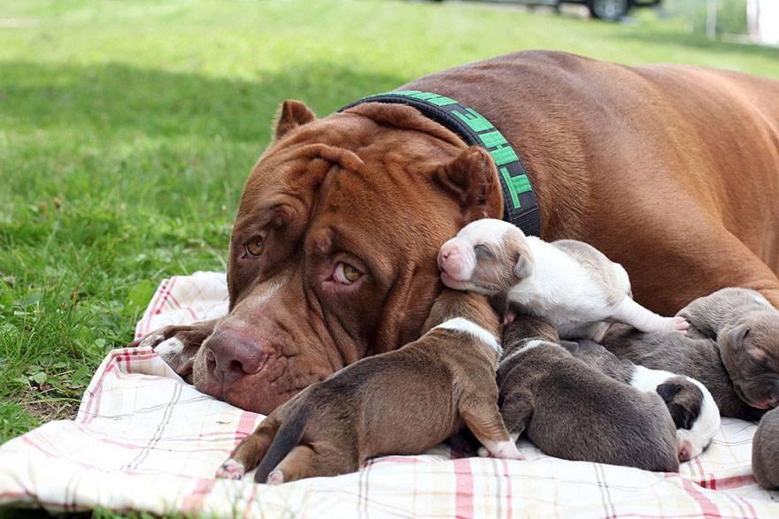 Плюсы собаки: 15 причин завести собаку - purina.ru
