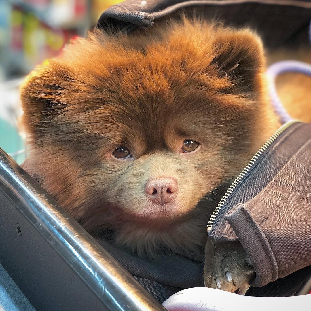 Топ-10 пород собак с внешностью медвежонка