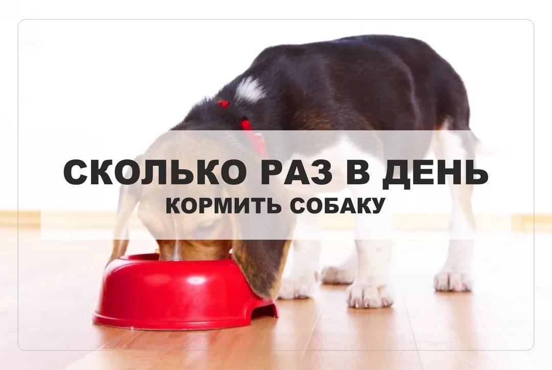 Питание собаки от щенка до взрослой собаки