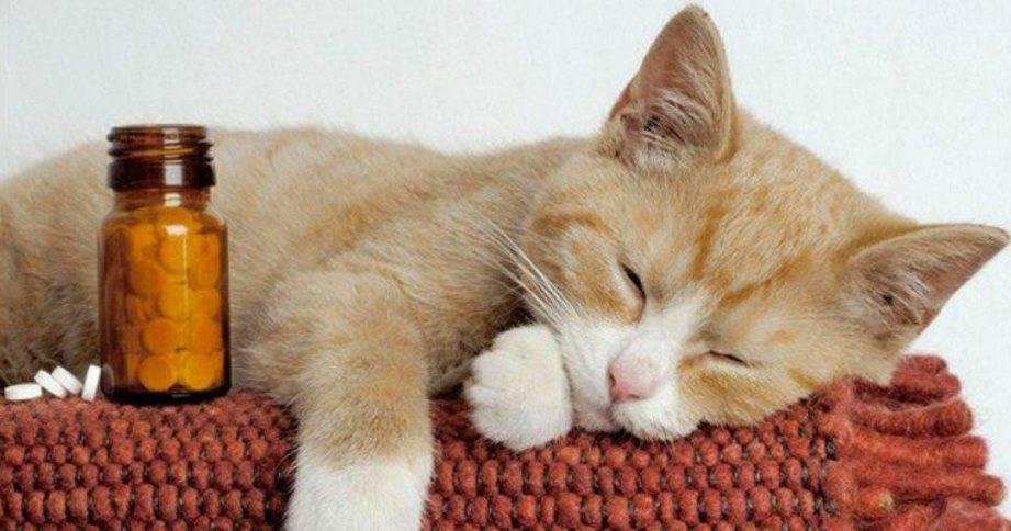 Почему коты и кошки любят валерьянку, как она на них действует и можно ли им ее давать?