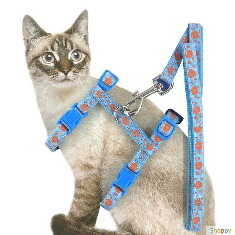 Все о шлейки для кошки, от выбора до самостоятельного изготовления