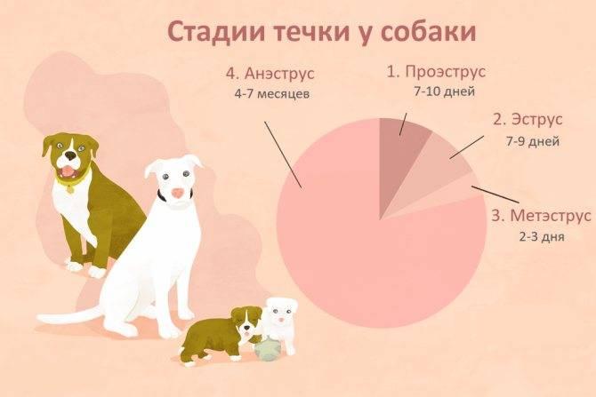Все о беременности у собак от а до я