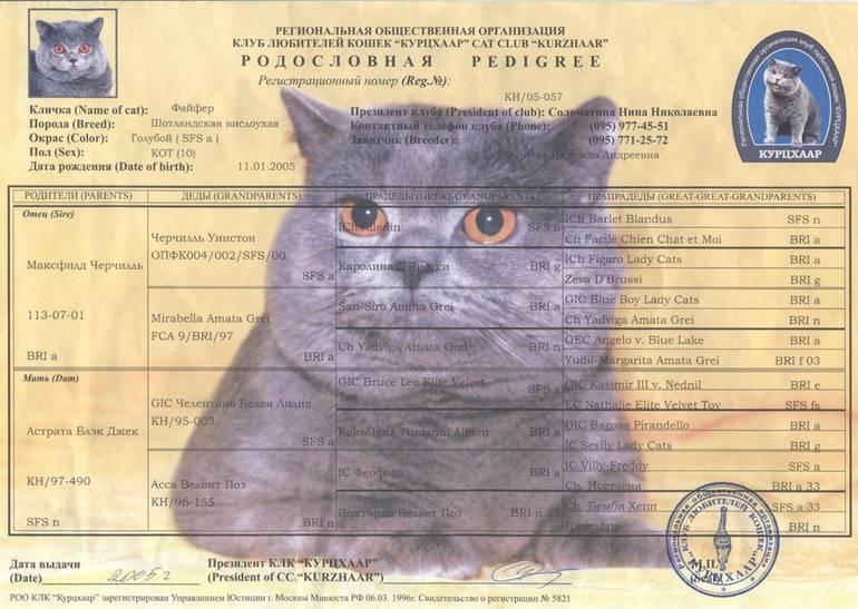 Документы на кошку с родословной: список необходимых бумаг, как оформить документы на котенка, дополнительные справки