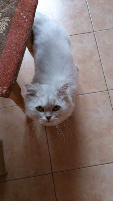 Что будет, если кошке или коту отрезать усы: последствия. вырастут ли у кошки обрезанные усы?
