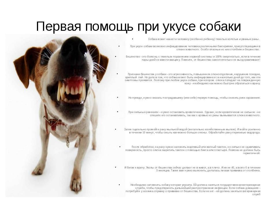 Кто несет ответственность, если укусила собака. первые шаги в возмещении ущерба