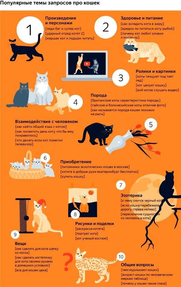 Почему нельзя обнимать котов и кошек: можно ли целовать питомцев