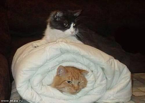 Кошка гадит на кровать: причины, что делать, приметы