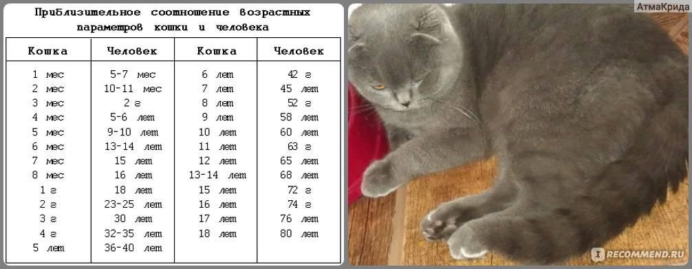 Коты-рекордсмены по продолжительности жизни
