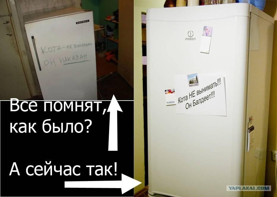 Входная дверь, холодильник, кран — что еще легко могут открыть ваши кошки