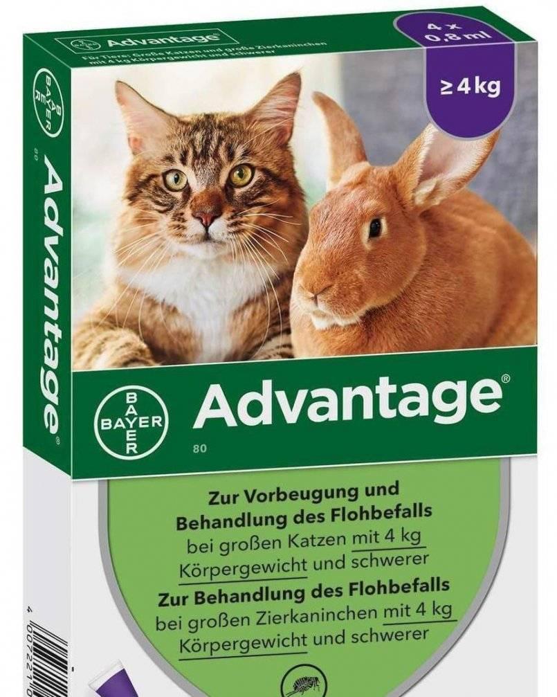 Advantage капли от блох для кошек