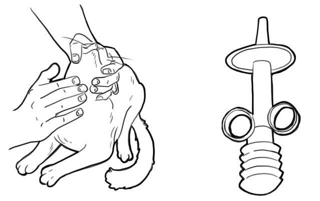 Как дать таблетку кошке или коту