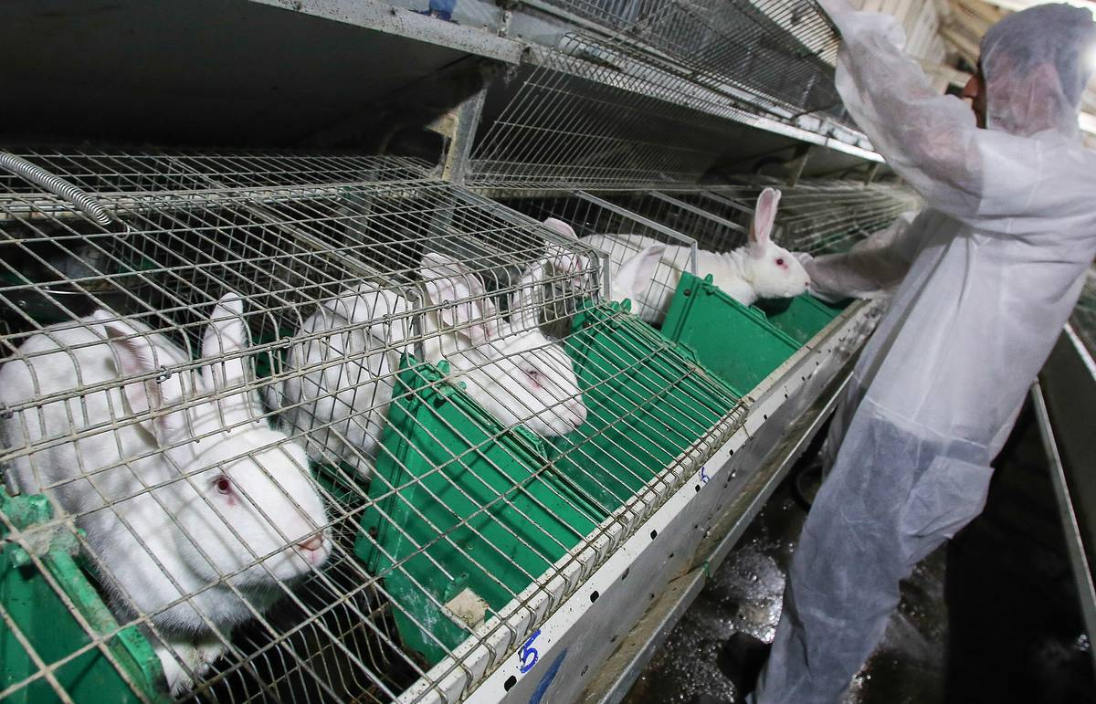 Бизнес-план мини-фермы по разведению кроликов