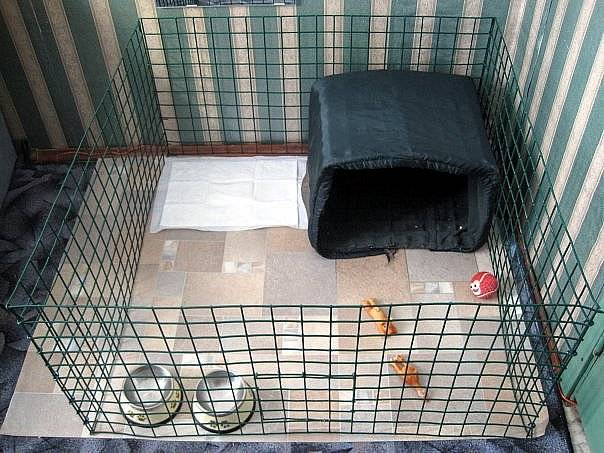 Вольер своими руками - описание постройки простых, просторных и удобных вольеров для собак (100+ фото