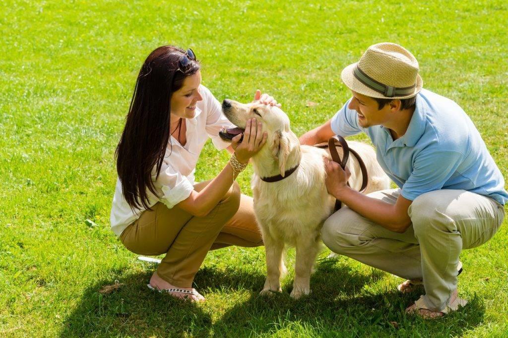 Почему и зачем собака ест траву: причины, последствия, стоит ли с этим бороться
