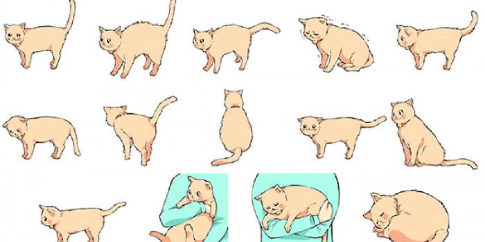 Почему у кошек хвост трубой