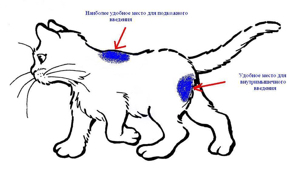 Как сделать укол кошке - 115 фото уколов в холку и видео инструкция как делаются внутривенные инъекции