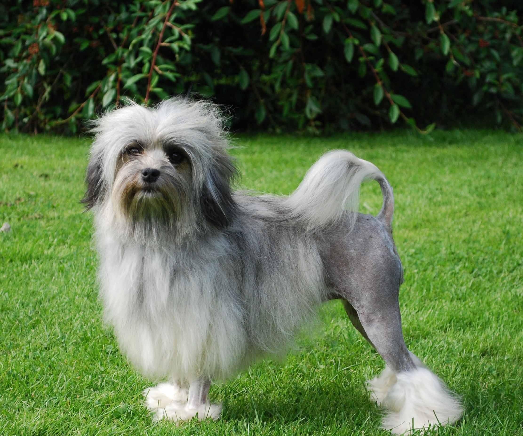 17 прелестных пород собак, о которых вы никогда не слышали - удивительный мир животных
