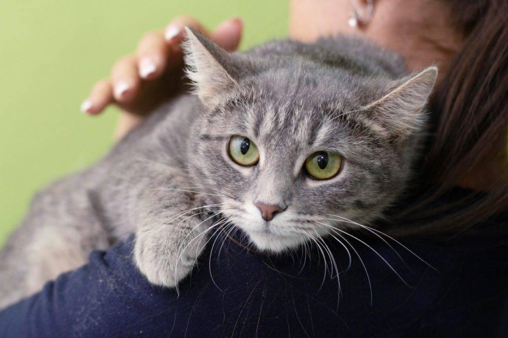 Беспородная кошка (domestic cat)