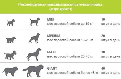Рост и вес щенка немецкой овчарки - oozoo.ru