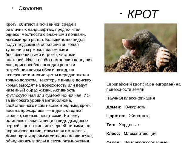 Хорьки как домашние животные: плюсы и минусы содержания | подробная информация