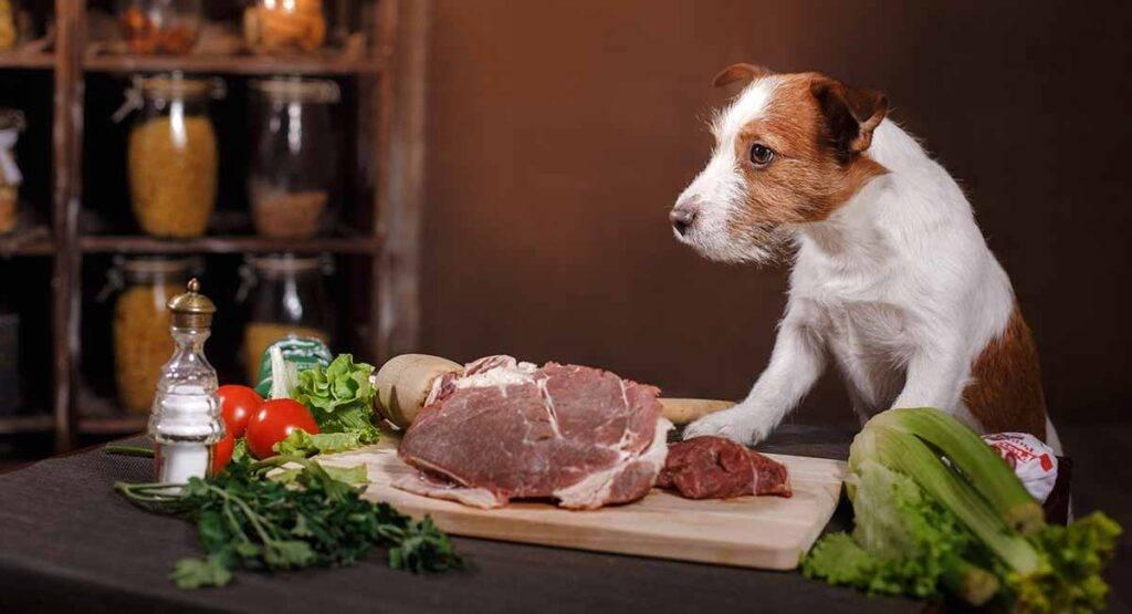 Кормить ли собаку сырым мясом: все за и против. можно ли давать собаке сырое мясо? - petstime.ru