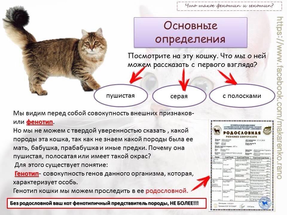 Основные признаки беременности кошки после вязки