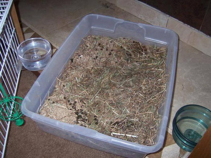 Как сделать туалет для кролика в домашних условиях